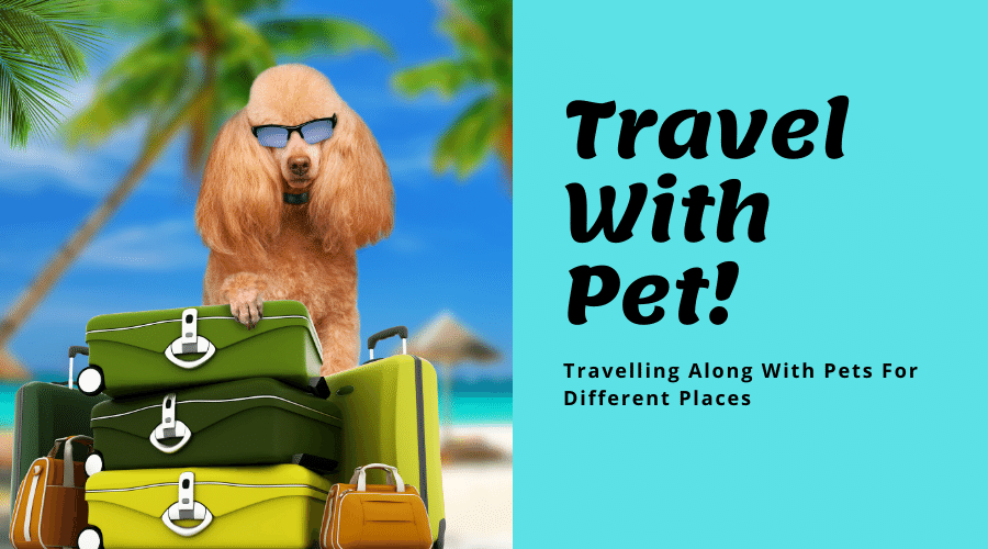 Travelling Along With Pets For Different Places