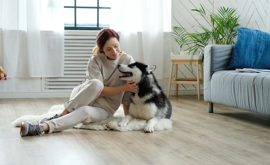 Dog-Proofing a Home – A Quick Guide for Humans